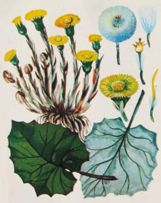 Лекарственные Растения Украины Справочник